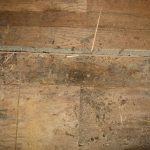 water damage restoration mold