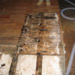 moldy water damage restoration