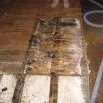 moldy water damage restoration