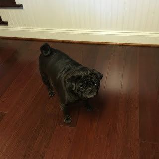 Hardwood Maintance when Having Dogs/Pets
