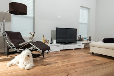 Wire-Brushed Natural Hickory Wood Flooring in Living Room with dogs and flatscreen